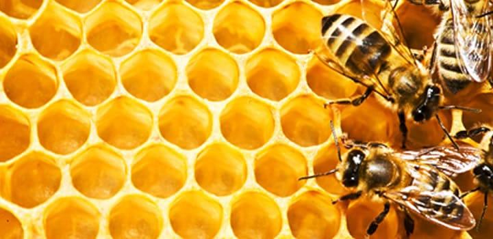 Honing is gouden zoetmaker